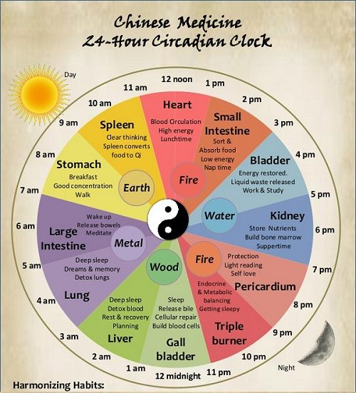 biological clock with waking hours in connection with different organs generating insomnia